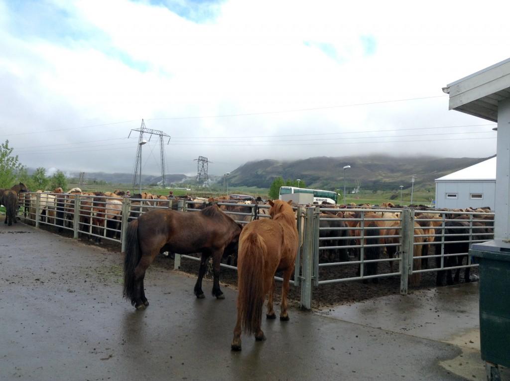 Mit der Herde geht es morgen auf Tour - unterwegs wird mehrmals das Pferd gewechselt.