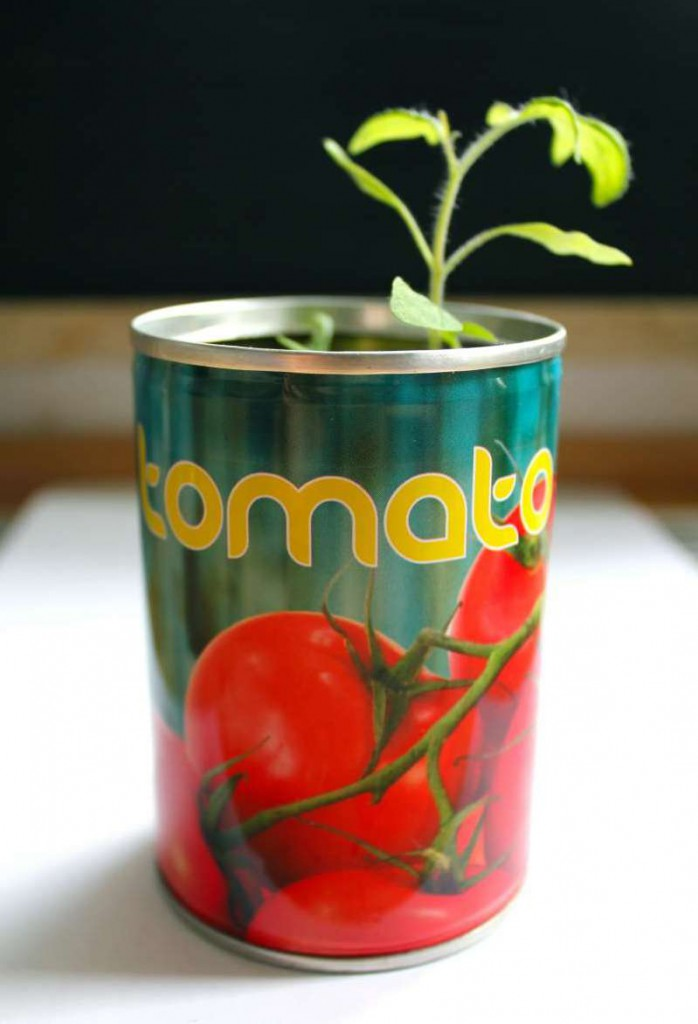 Tomate in der Dose