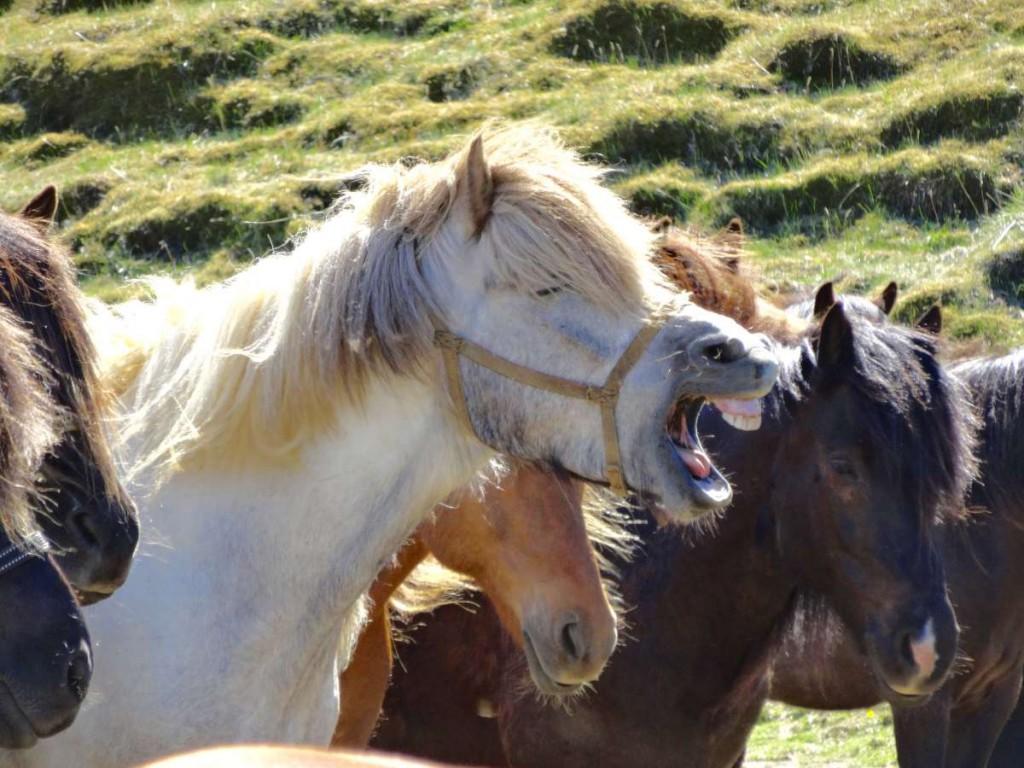 Pony Gähnt Tag 2