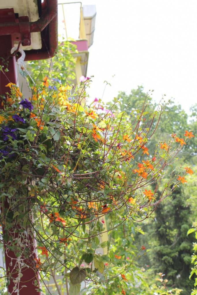 Blumenkorb hängend